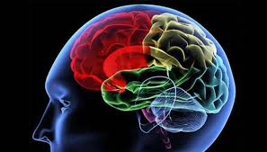 Membedah Struktur Otak LGBT yang Meninggal